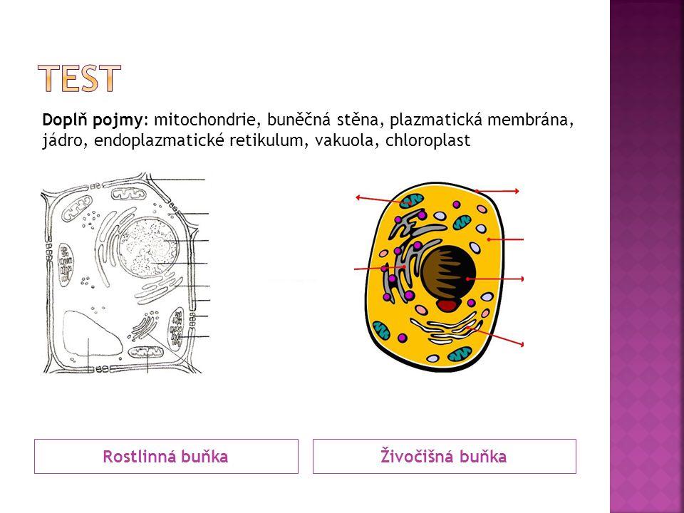 Rostlinná buňkaŽivočišná buňka Doplň pojmy: mitochondrie, buněčná stěna, plazmatická membrána, jádro, endoplazmatické retikulum, vakuola, chloroplast