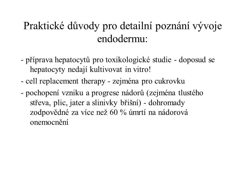 Praktické důvody pro detailní poznání vývoje endodermu: - příprava hepatocytů pro toxikologické studie - doposud se hepatocyty nedají kultivovat in vi