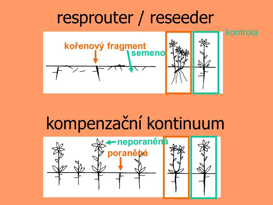 kontrola semeno kořenový fragment resprouter / reseeder neporaněná poraněná kompenzační kontinuum