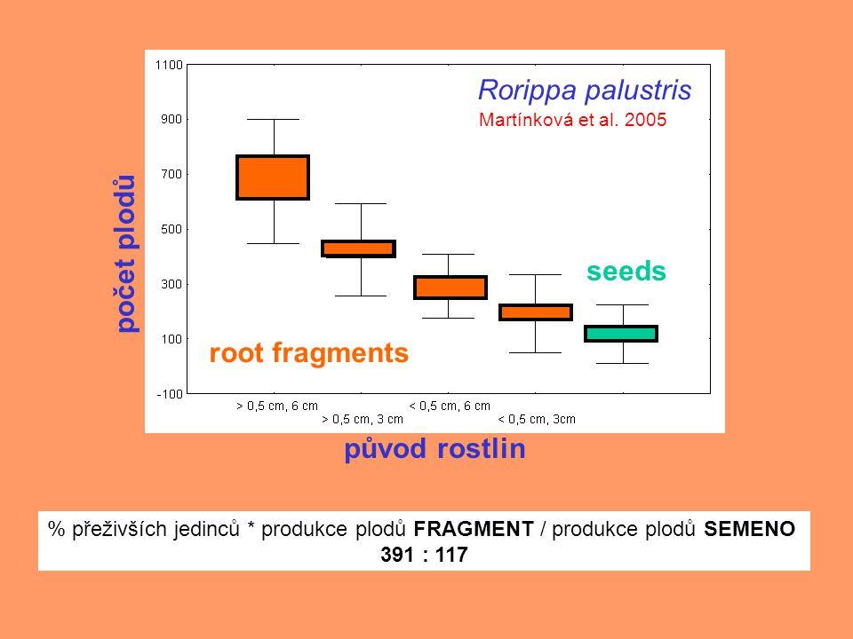 root fragments seeds počet plodů původ rostlin Rorippa palustris Martínková et al.