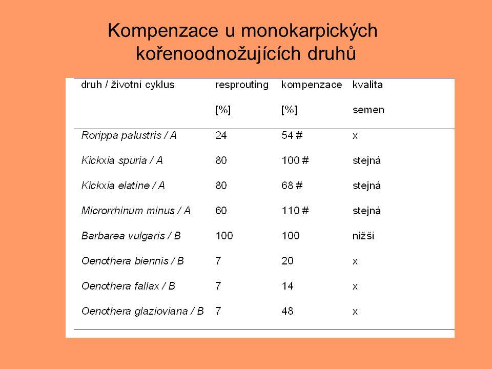 Kompenzace u monokarpických kořenoodnožujících druhů