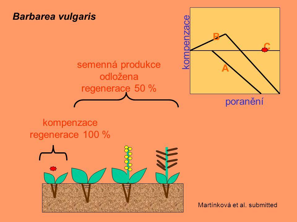 kompenzace poranění C A B Barbarea vulgaris semenná produkce odložena regenerace 50 % kompenzace regenerace 100 % Martínková et al.
