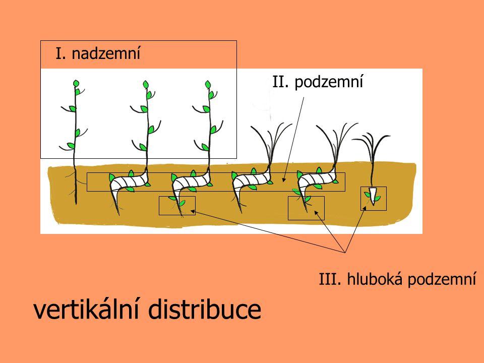 vertikální distribuce II. podzemní III. hluboká podzemní I. nadzemní