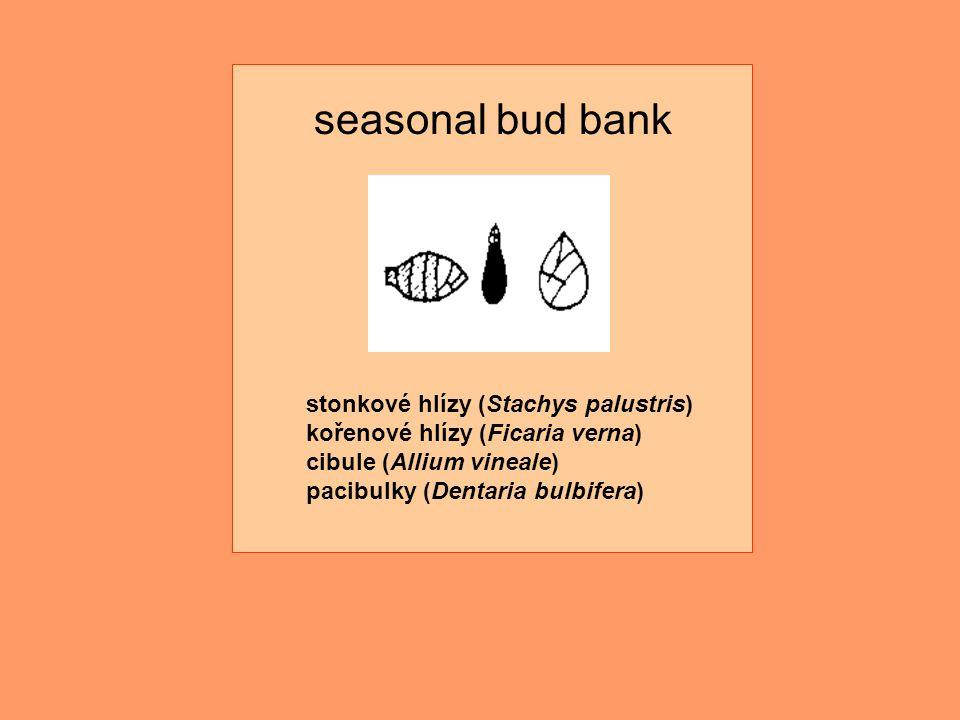 stonkové hlízy (Stachys palustris) kořenové hlízy (Ficaria verna) cibule (Allium vineale) pacibulky (Dentaria bulbifera) seasonal bud bank