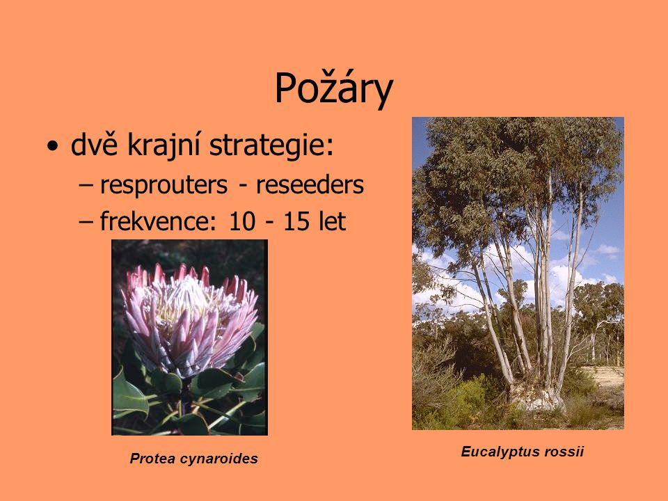 Herbivoři adaptovaná (= tolerantní) rostlina má vyšší fitness, když je jedena než když jedena není –několikrát to bylo dokázáno –mnohokrát to bylo zpochybněno –problém je metodický, osvědčený model: monokarpické byliny
