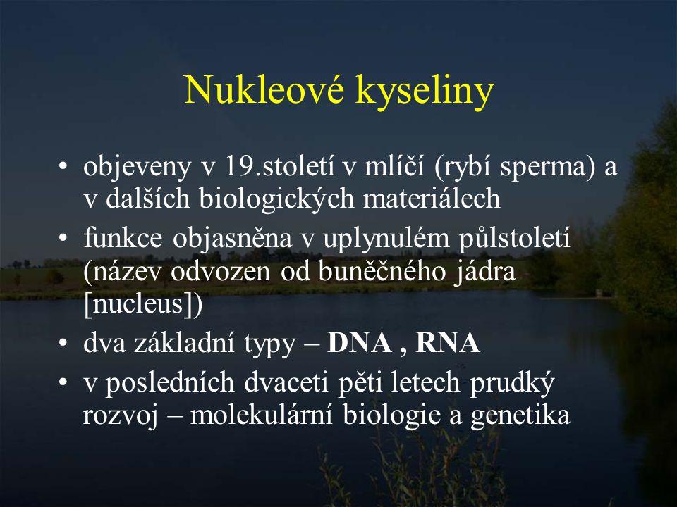 Složení nukleových kyselin kyselina fosforečná (H 3 PO 4 ) pentosa (pětiuhlíkatý cukr) D-ribosa 2-deoxy-D-ribosa (RNA)(DNA)