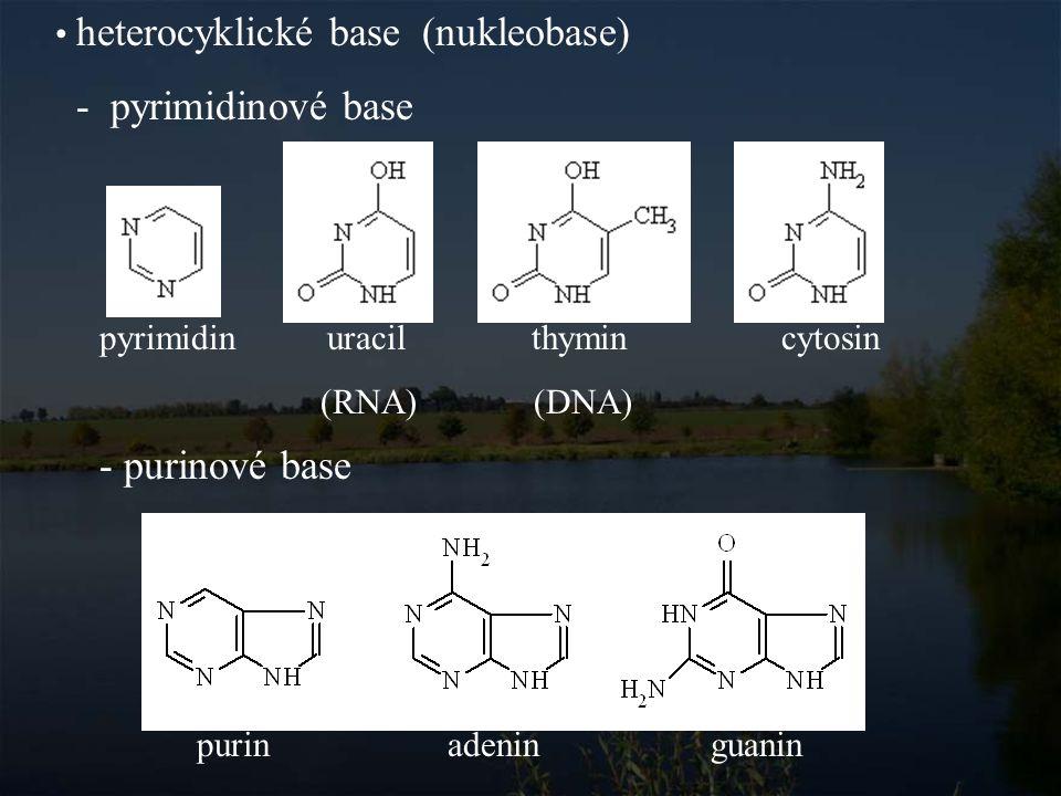 Nukleosid Nukleosid je sloučenina pentosy (ribosy nebo deoxyribosy) a heterocyklické base.