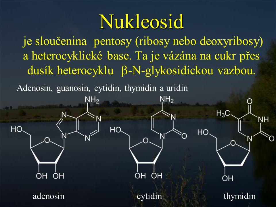 Nukleotid nukleosid esterifikovaný fosforečnou kyselinou buď na 5´-hydroxylové skupině (pouze tyto jsou prekursory nukleových kyselin) nebo řidčeji 3´-hydroxylové skupině.