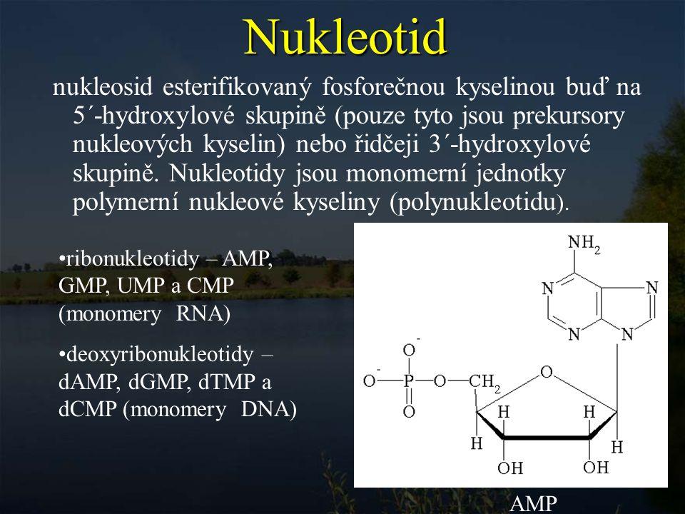 Nukleová kyselina je polynukleotidový řetězec, který je tvořen mononukleosidy vázanými navzájem fosfodiesterovými vazbami.