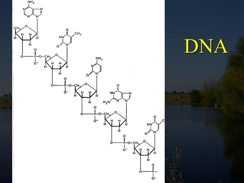 DNA existuje v nativní formě převážně jako dvojvláknová šroubovice (dvoušroubovice, double helix, duplex)