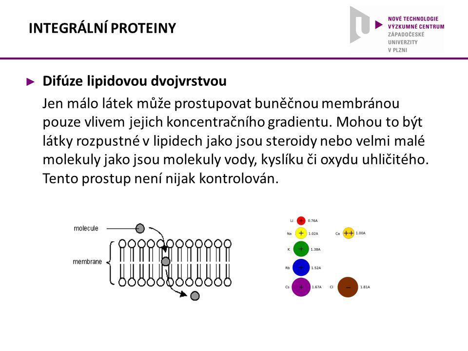 ► Difúze lipidovou dvojvrstvou Jen málo látek může prostupovat buněčnou membránou pouze vlivem jejich koncentračního gradientu. Mohou to být látky roz