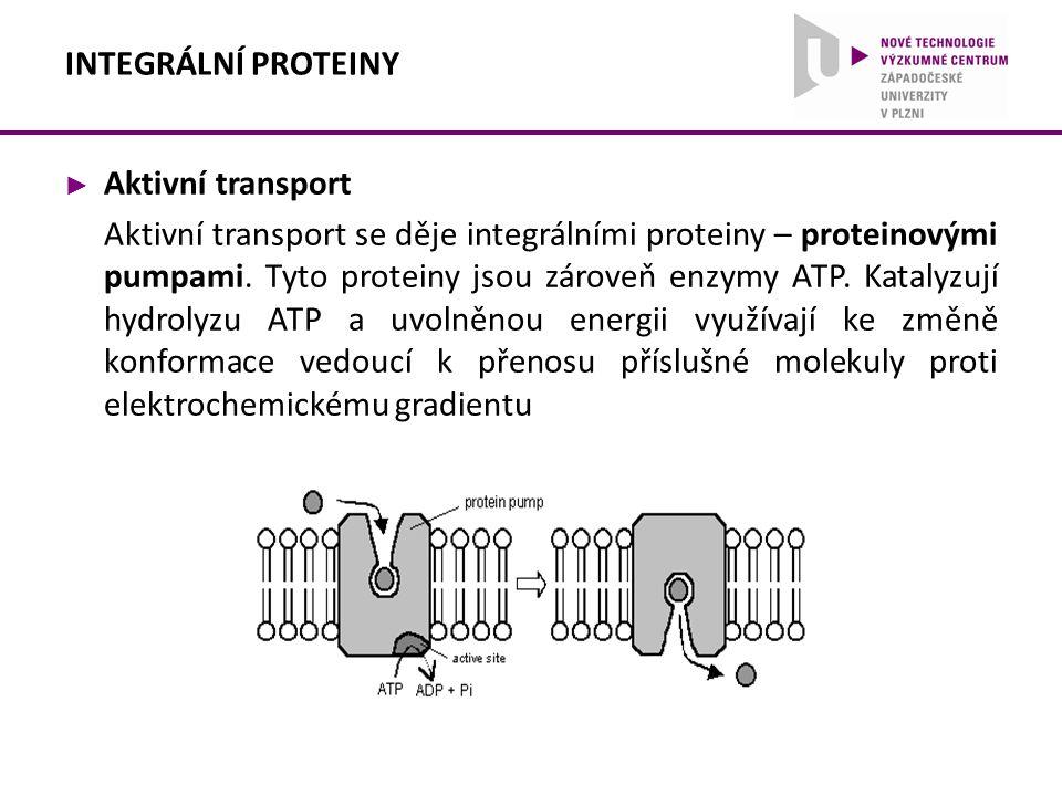 ► Aktivní transport Aktivní transport se děje integrálními proteiny – proteinovými pumpami. Tyto proteiny jsou zároveň enzymy ATP. Katalyzují hydrolyz