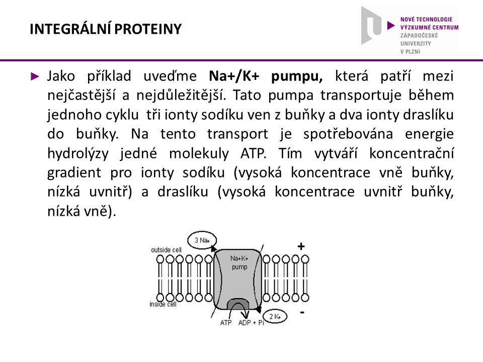 ► Jako příklad uveďme Na+/K+ pumpu, která patří mezi nejčastější a nejdůležitější. Tato pumpa transportuje během jednoho cyklu tři ionty sodíku ven z