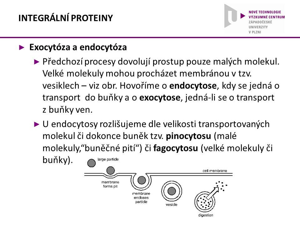 ► Exocytóza a endocytóza ► Předchozí procesy dovolují prostup pouze malých molekul. Velké molekuly mohou procházet membránou v tzv. vesiklech – viz ob