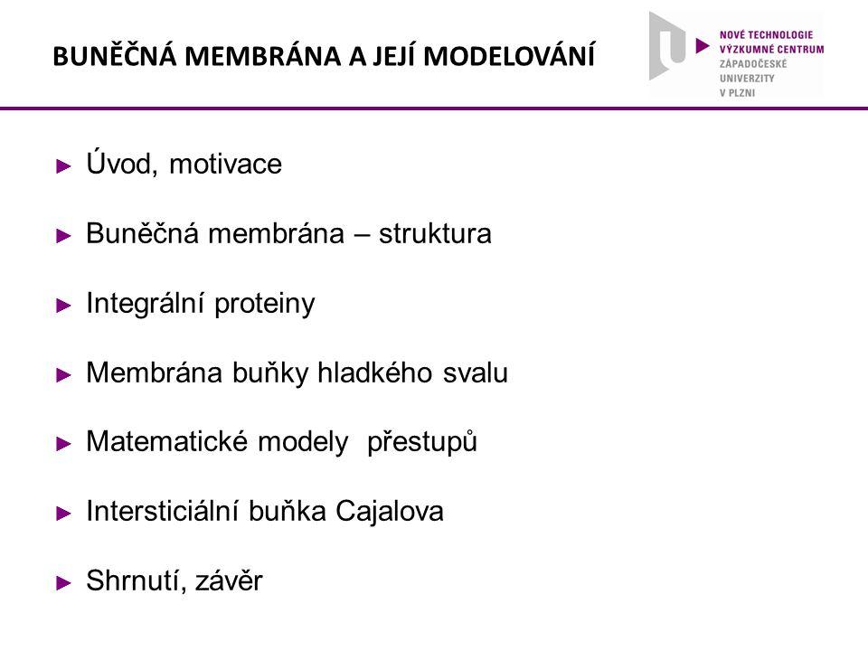 BUNĚČNÁ MEMBRÁNA A JEJÍ MODELOVÁNÍ ► Úvod, motivace ► Buněčná membrána – struktura ► Integrální proteiny ► Membrána buňky hladkého svalu ► Matematické