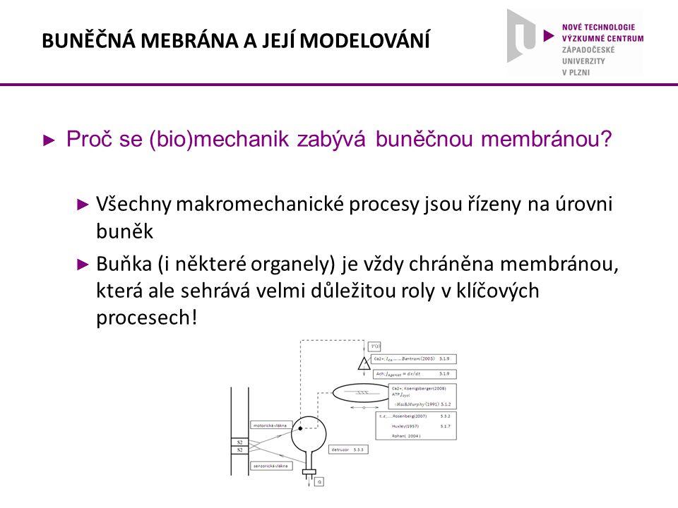 BUNĚČNÁ MEBRÁNA A JEJÍ MODELOVÁNÍ ► Proč se (bio)mechanik zabývá buněčnou membránou? ► Všechny makromechanické procesy jsou řízeny na úrovni buněk ► B
