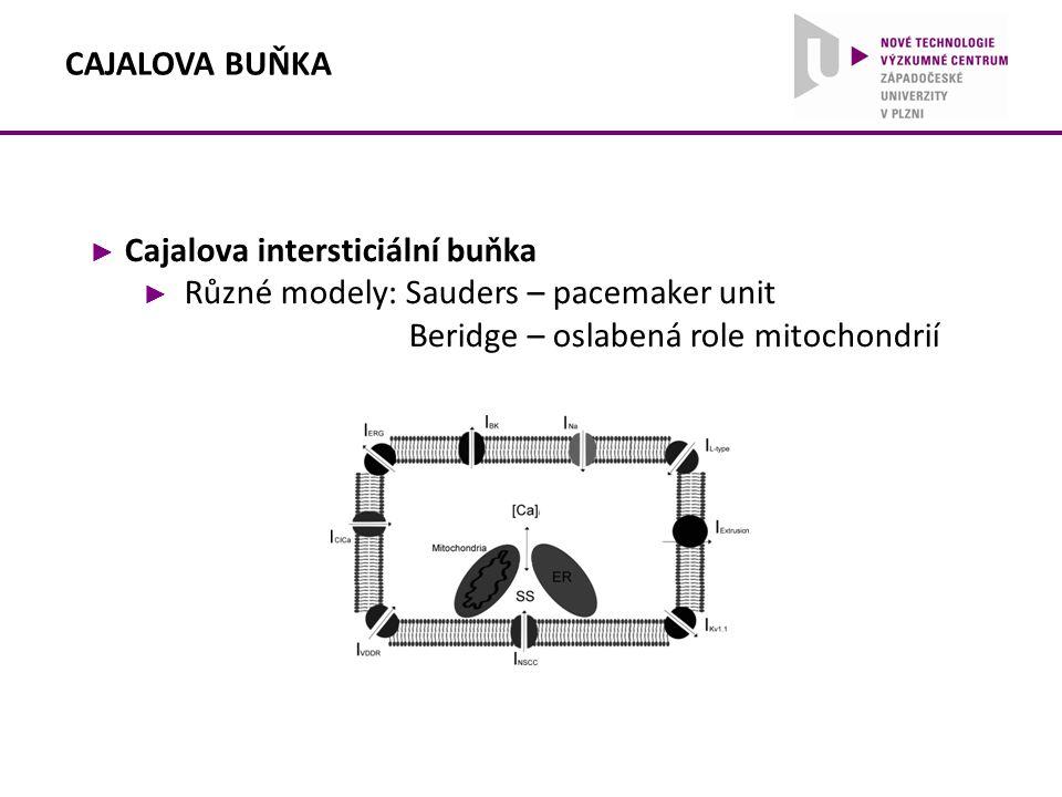 ► Cajalova intersticiální buňka ► Různé modely: Sauders – pacemaker unit Beridge – oslabená role mitochondrií CAJALOVA BUŇKA