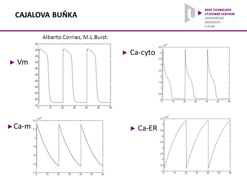 ► Vm ► Ca-cyto ► Ca-m ► Ca-ER Alberto Corrias, M.L.Buist: CAJALOVA BUŇKA