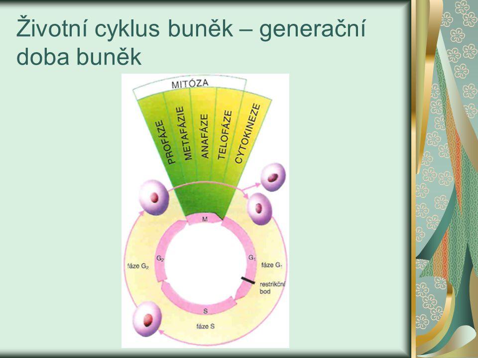 Dělení buněk zahrnuje vždy 2 fáze: Karyokineze – dělení jádra ( rovnoměrné rozdělení genetického materiálu) – probíhá buď a) mitózou – při ní vznikají tělní ( somatické buňky) b) meiózou –při ní vznikají pohlavní buňky ( gamety) nebo výtrusy( spóry) Cytokineze – dělení celé buňky ( zmnožují se organely a jiné struktury)