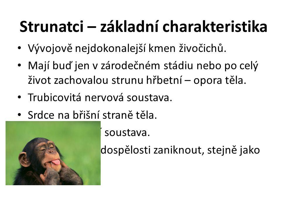 Strunatci – základní charakteristika Vývojově nejdokonalejší kmen živočichů.