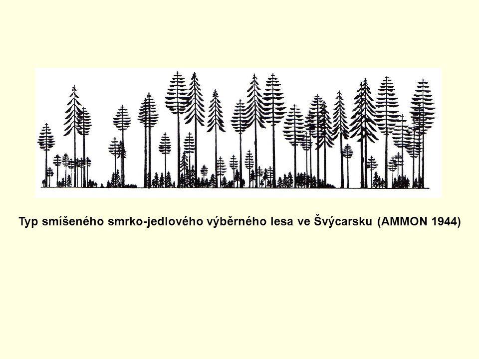 Typ smíšeného smrko-jedlového výběrného lesa ve Švýcarsku (AMMON 1944)