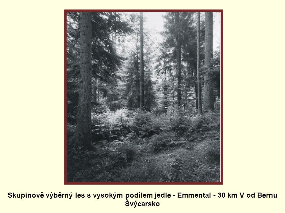 Skupinově výběrný les s vysokým podílem jedle - Emmental - 30 km V od Bernu Švýcarsko