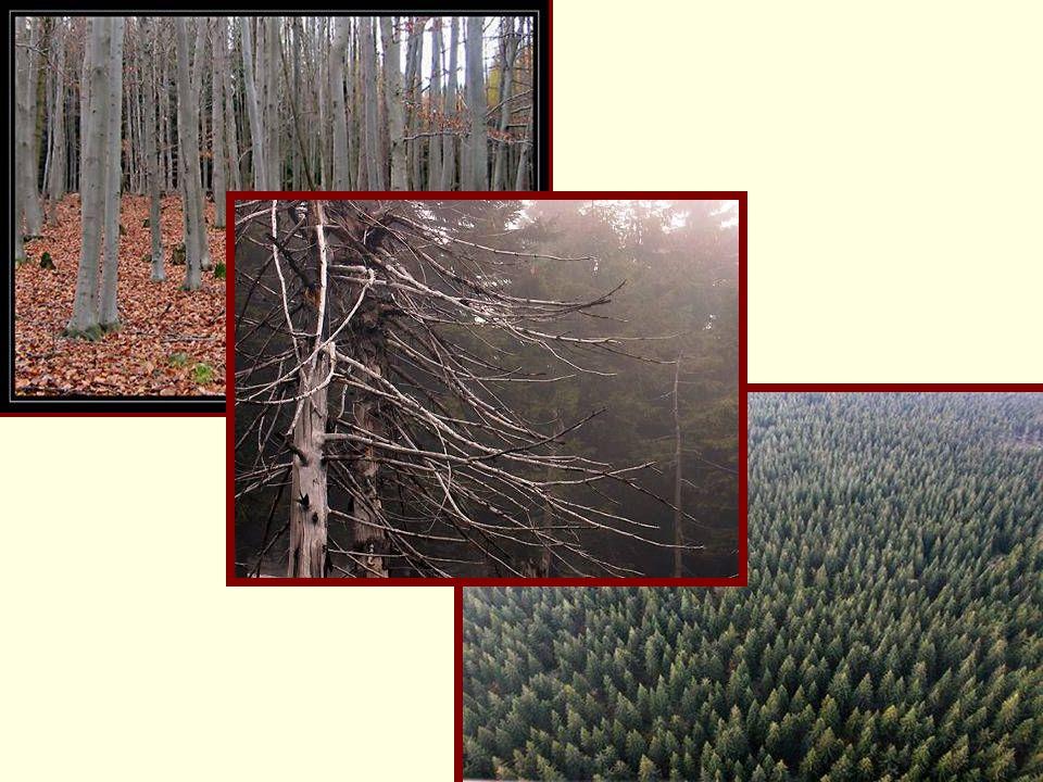 Střední les (sdružený les) Je tvarem dvou či vícevrstvého etážového lesa, kde spodní vrstvu tvoří les nízký, horní vrstvu nebo i vrstvy tvoří i několik věkových tříd výstavků Výstavková vrstva se tvoří při každé seči nízkého lesa ponecháním 50 – 100 kvalitních jedinců na 1 ha, buď výmladkových nebo semenných jedinců