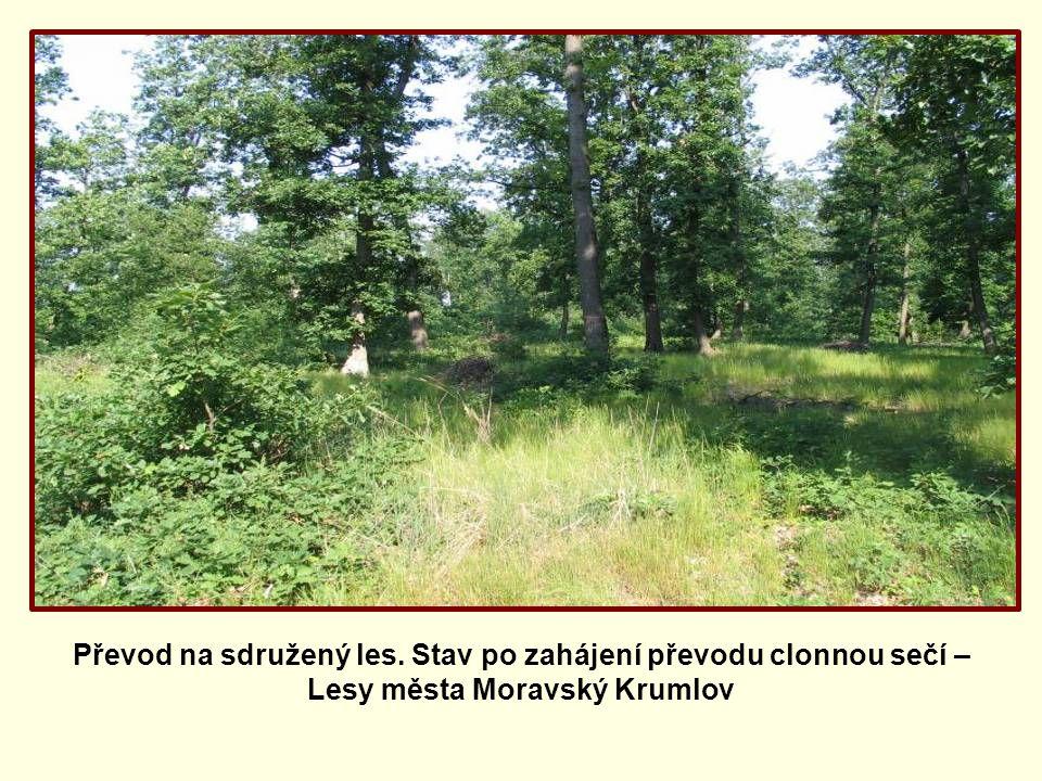 Převod na sdružený les. Stav po zahájení převodu clonnou sečí – Lesy města Moravský Krumlov