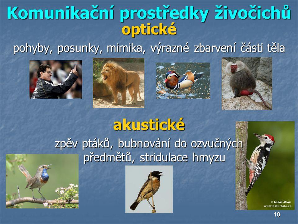 10 Komunikační prostředky živočichů optické pohyby, posunky, mimika, výrazné zbarvení části těla akustické zpěv ptáků, bubnování do ozvučných předmětů