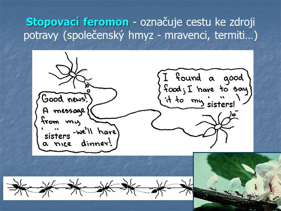 23 Stopovací feromon Stopovací feromon - označuje cestu ke zdroji potravy (společenský hmyz - mravenci, termiti…) sisters sisters!