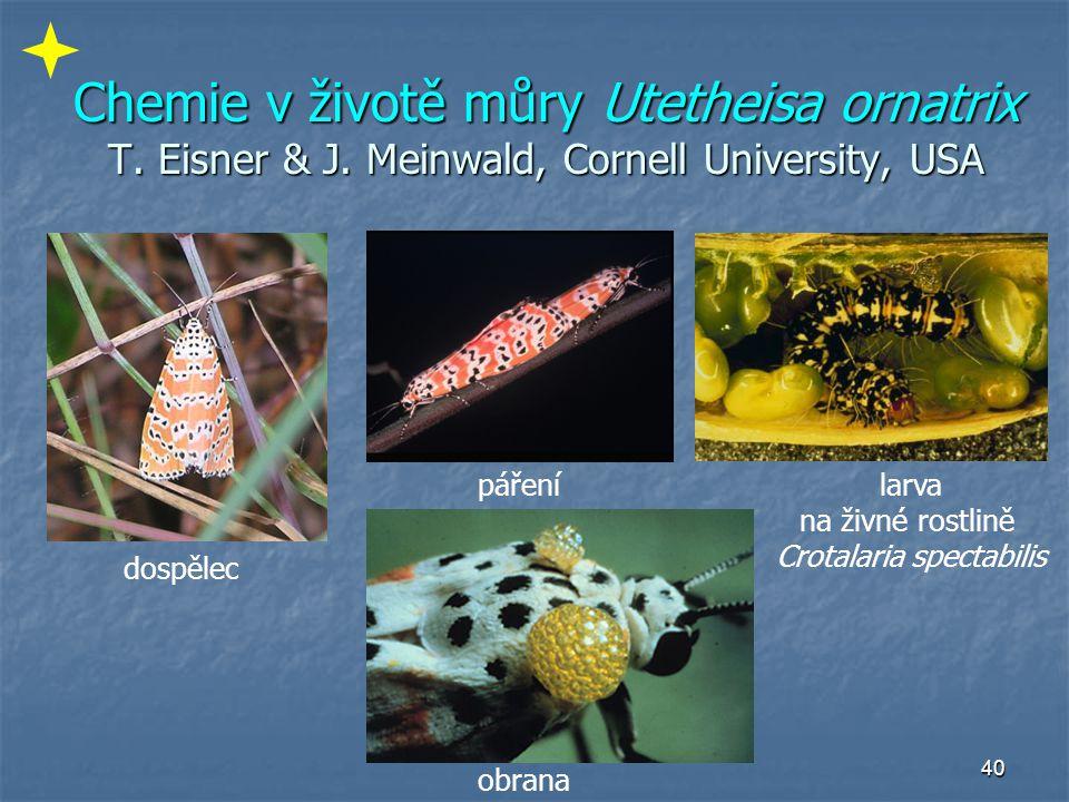 40 Chemie v životě můry Utetheisa ornatrix T. Eisner & J. Meinwald, Cornell University, USA dospělec pářenílarva na živné rostlině Crotalaria spectabi