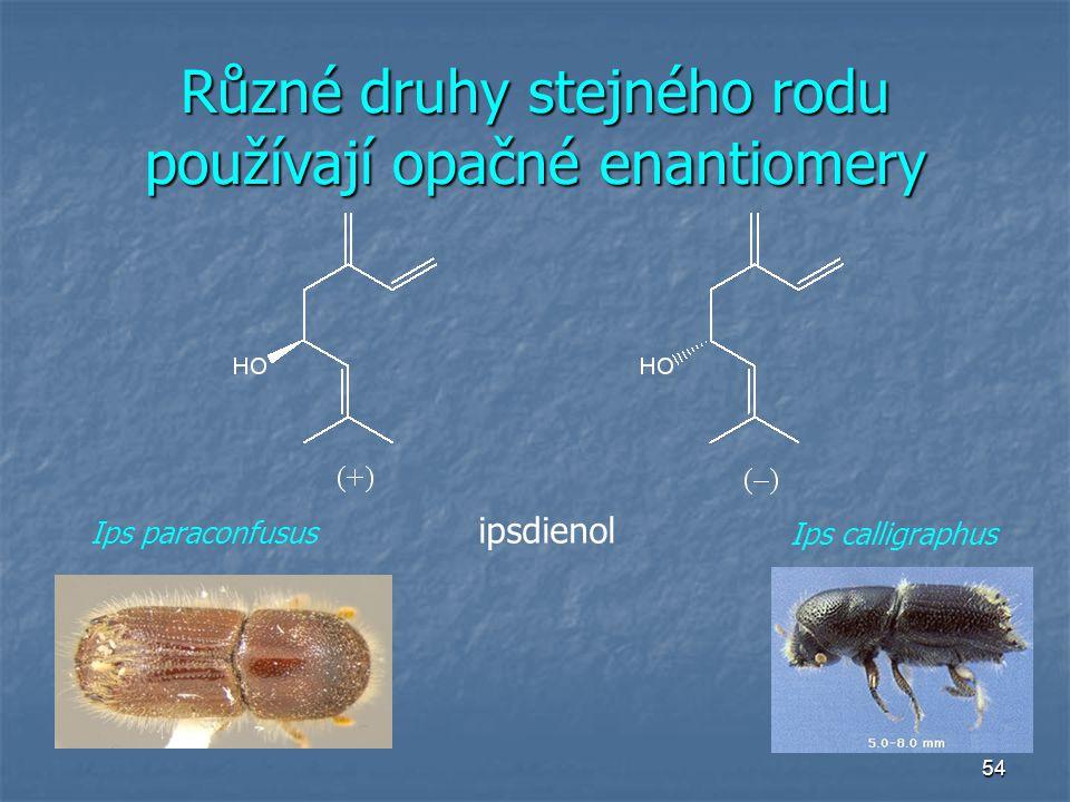54 Různé druhy stejného rodu používají opačné enantiomery ipsdienol Ips paraconfusus Ips calligraphus