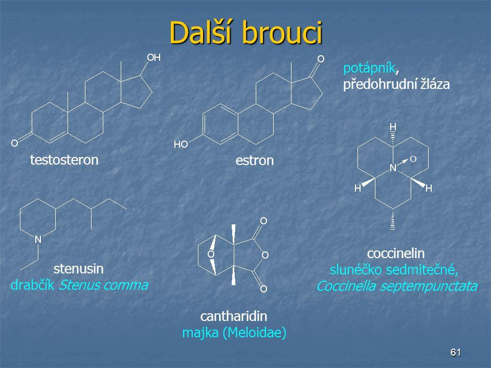 61 Další brouci testosteron estron potápník, předohrudní žláza stenusin drabčík Stenus comma coccinelin slunéčko sedmitečné, Coccinella septempunctata
