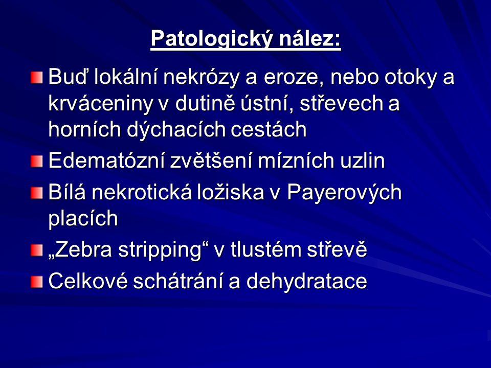 Patologický nález: Buď lokální nekrózy a eroze, nebo otoky a krváceniny v dutině ústní, střevech a horních dýchacích cestách Edematózní zvětšení mízní