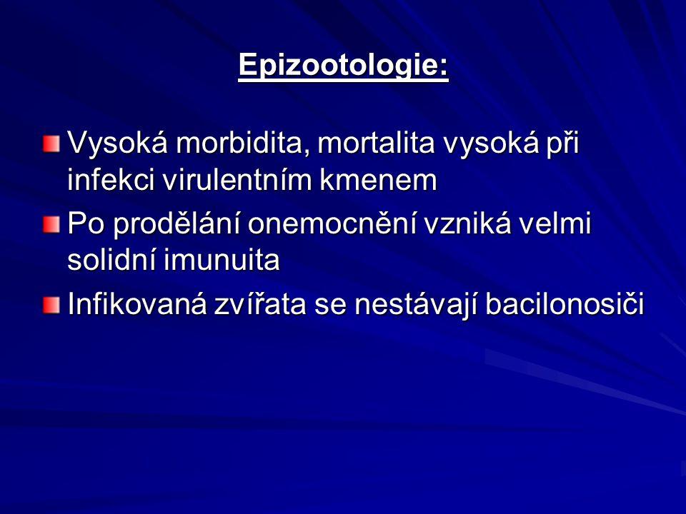Epizootologie: Vysoká morbidita, mortalita vysoká při infekci virulentním kmenem Po prodělání onemocnění vzniká velmi solidní imunuita Infikovaná zvíř