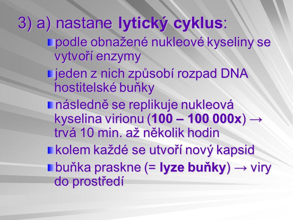 3) a) nastane lytický cyklus: podle obnažené nukleové kyseliny se vytvoří enzymy jeden z nich způsobí rozpad DNA hostitelské buňky následně se repliku