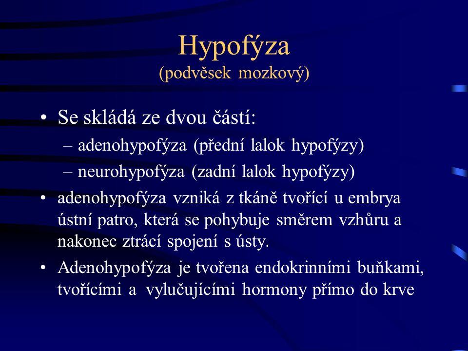 Hypofýza (podvěsek mozkový) Se skládá ze dvou částí: –adenohypofýza (přední lalok hypofýzy) –neurohypofýza (zadní lalok hypofýzy) adenohypofýza vzniká