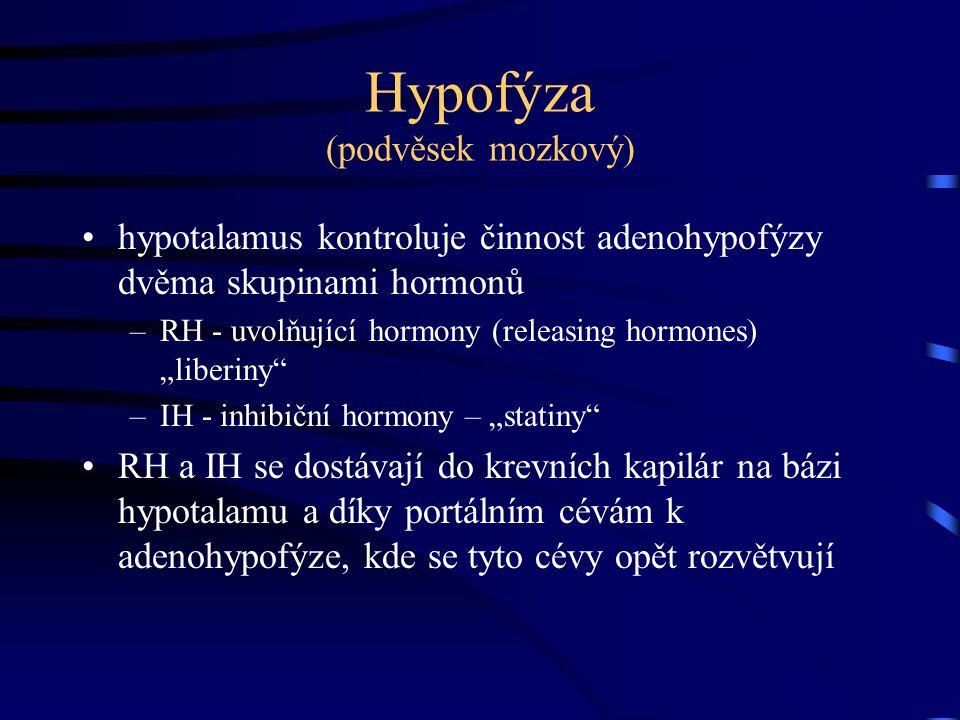"""Hypofýza (podvěsek mozkový) hypotalamus kontroluje činnost adenohypofýzy dvěma skupinami hormonů –RH - uvolňující hormony (releasing hormones) """"liberi"""