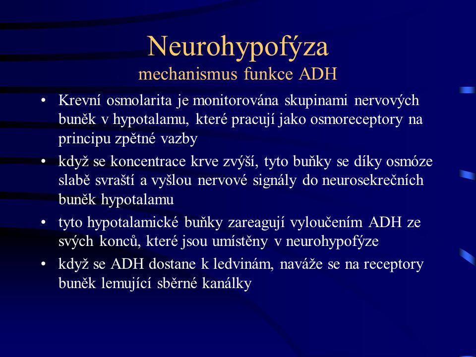 Neurohypofýza mechanismus funkce ADH Krevní osmolarita je monitorována skupinami nervových buněk v hypotalamu, které pracují jako osmoreceptory na pri