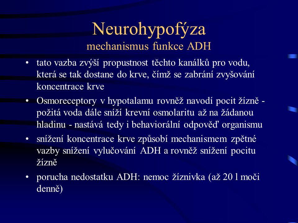 Neurohypofýza mechanismus funkce ADH tato vazba zvýší propustnost těchto kanálků pro vodu, která se tak dostane do krve, čímž se zabrání zvyšování kon