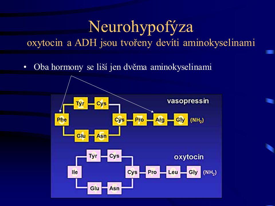 Neurohypofýza oxytocin a ADH jsou tvořeny devíti aminokyselinami Oba hormony se liší jen dvěma aminokyselinami