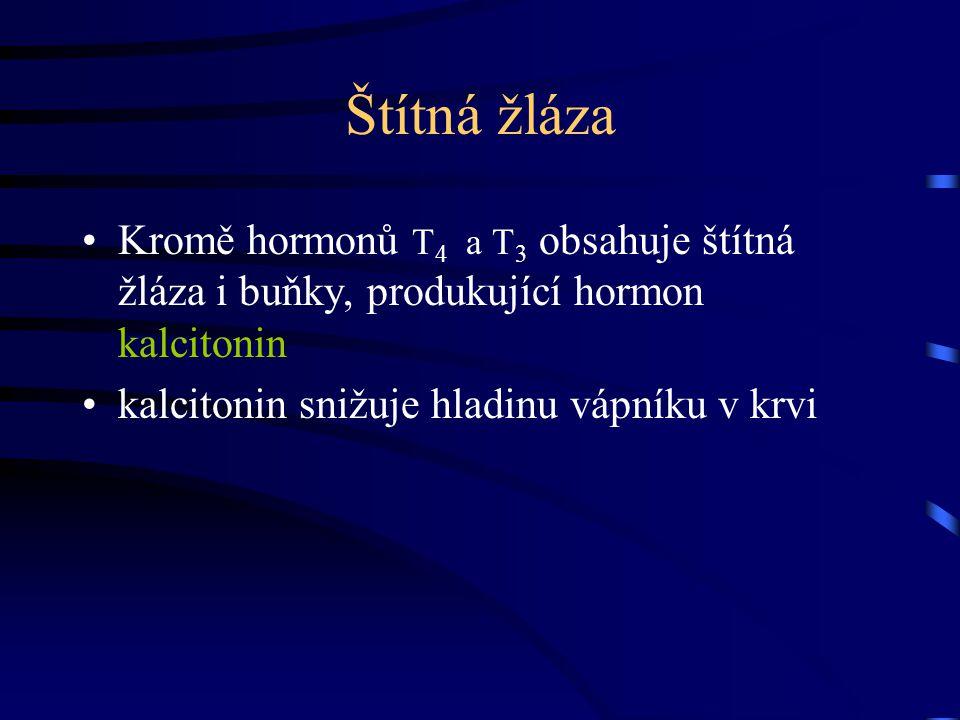 Štítná žláza Kromě hormonů T 4 a T 3 obsahuje štítná žláza i buňky, produkující hormon kalcitonin kalcitonin snižuje hladinu vápníku v krvi