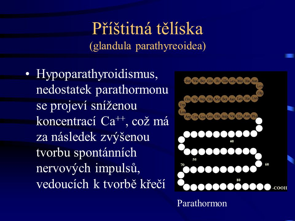 Příštitná tělíska (glandula parathyreoidea) Hypoparathyroidismus, nedostatek parathormonu se projeví sníženou koncentrací Ca ++, což má za následek zv