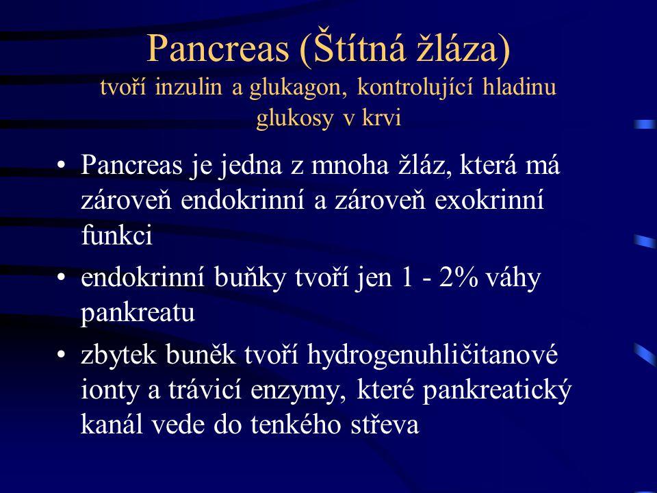 Pancreas (Štítná žláza) tvoří inzulin a glukagon, kontrolující hladinu glukosy v krvi Pancreas je jedna z mnoha žláz, která má zároveň endokrinní a zá