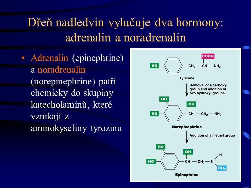 Dřeň nadledvin vylučuje dva hormony: adrenalin a noradrenalin Adrenalin (epinephrine) a noradrenalin (norepinephrine) patří chemicky do skupiny katech