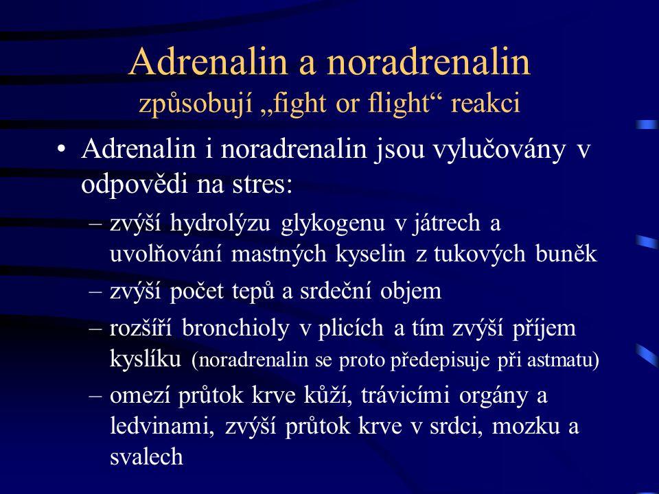"""Adrenalin a noradrenalin způsobují """"fight or flight"""" reakci Adrenalin i noradrenalin jsou vylučovány v odpovědi na stres: –zvýší hydrolýzu glykogenu v"""