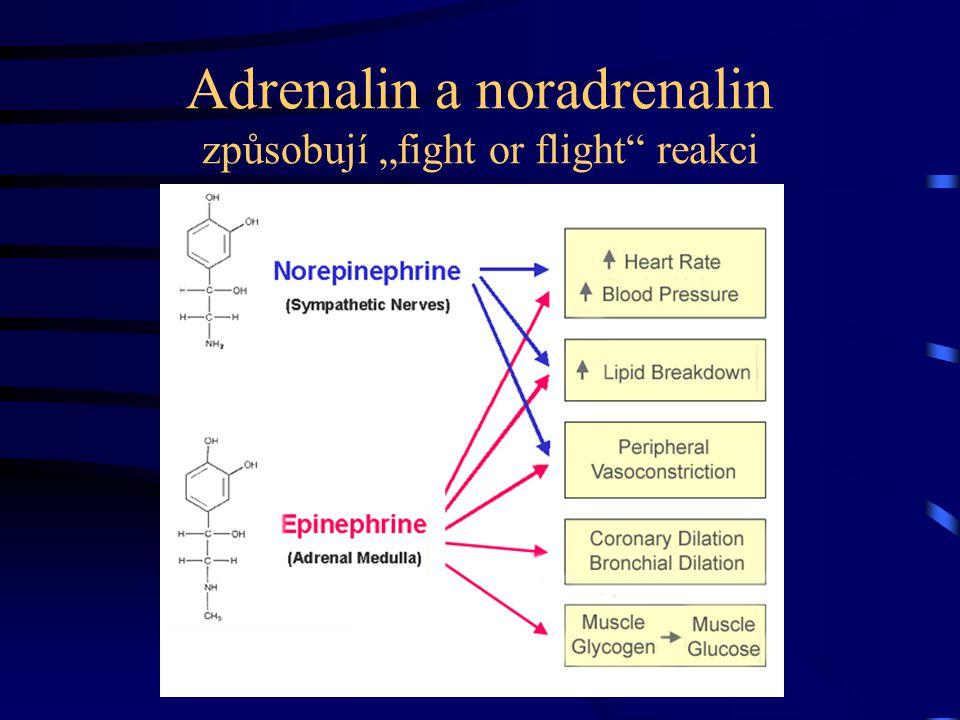 "Adrenalin a noradrenalin způsobují ""fight or flight"" reakci"