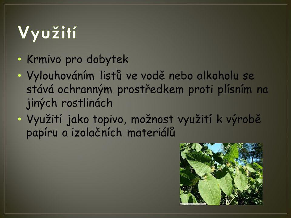 Krmivo pro dobytek Vylouhováním listů ve vodě nebo alkoholu se stává ochranným prostředkem proti plísním na jiných rostlinách Využití jako topivo, mož