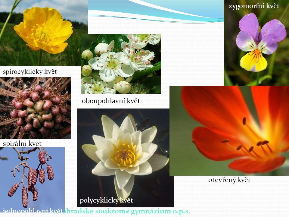 © Letohradské soukromé gymnázium o.p.s. spirocyklický květ spirální květ oboupohlavní květ jednopohlavní květ polycyklický květ zygomorfní květ otevře