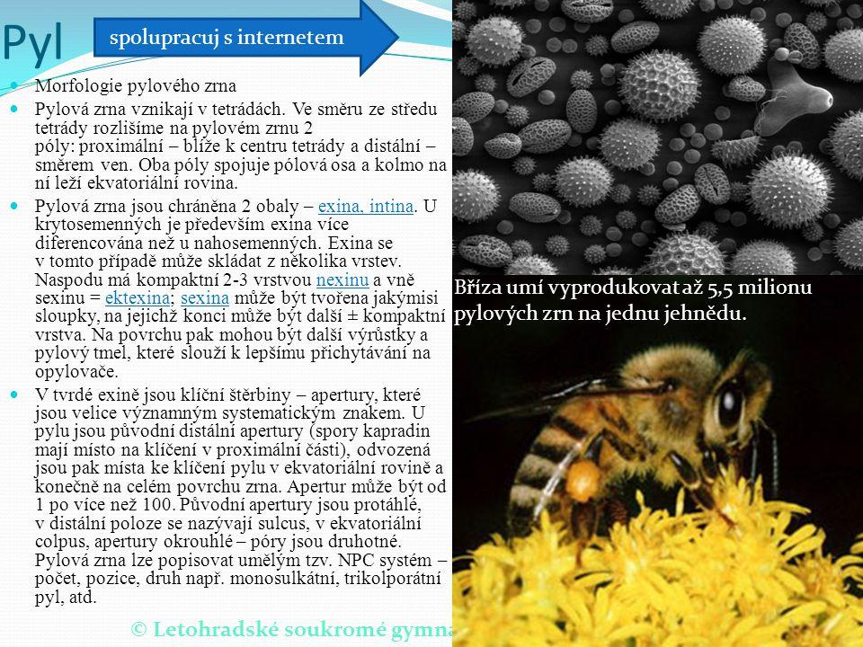 © Letohradské soukromé gymnázium o.p.s. Pyl Morfologie pylového zrna Pylová zrna vznikají v tetrádách. Ve směru ze středu tetrády rozlišíme na pylovém